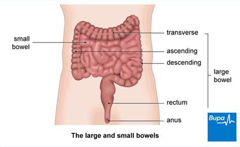 rectal prolapse health information bupa uk