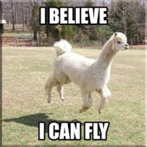 Llama Meme - funny llama quotes quotesgram