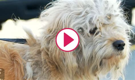 Pet Groomers Give Rescue Dog Second Chance Adoption