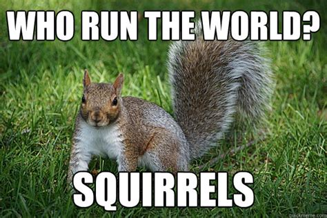 Squirrel Memes - who run the world squirrels adele quickmeme