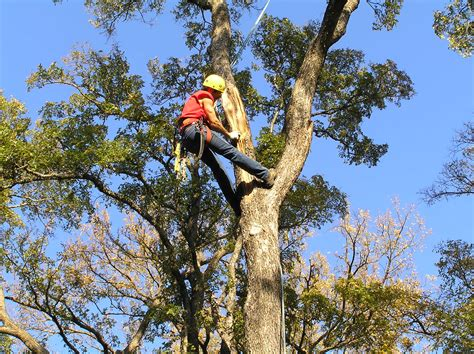 caring for trees tree care idtlandscaping com