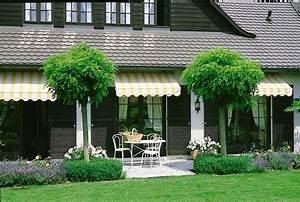 Pflanzen Für Den Vorgarten : schnellwachsende b ume f r den garten schnellwachsende ~ Michelbontemps.com Haus und Dekorationen