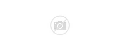 Animals Wild Standing Vector Illustration Different Types