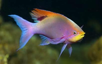 Ikan Gambar Hias Fish Animals Water Under