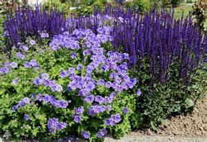 Winterharte Pflanzen Liste : storchschnabel geranium arten pflege ~ Michelbontemps.com Haus und Dekorationen