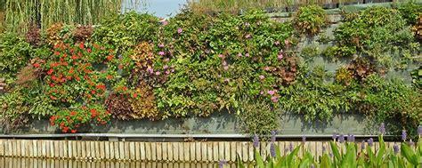 construire mur vegetal exterieur conseils accueil design et mobilier