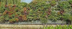 Mur Vegetal Exterieur : le mur v g tal blog oleomac ~ Melissatoandfro.com Idées de Décoration
