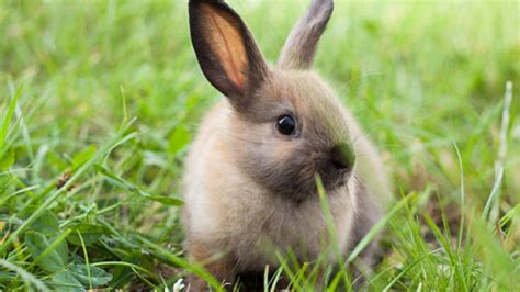Animal farm appeal for help after 3-week-old bunny stolen ...