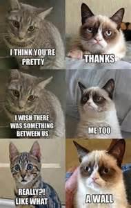 Fotos - Cats With Meme