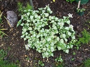 Couvre Sol Vivace : plantes vivaces couvre sol page 20 au jardin forum ~ Premium-room.com Idées de Décoration
