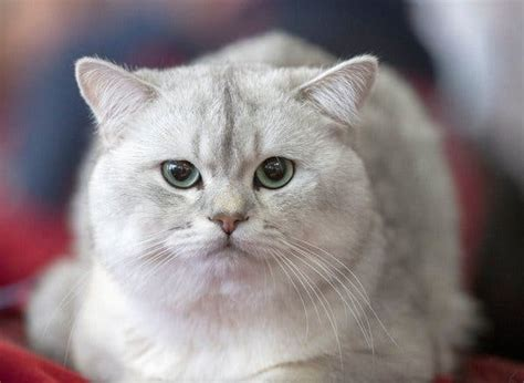 cat declawing ban  passed  ny lawmakers