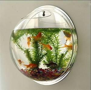 Goldfisch Haltung Im Teich : aquarium einrichtung sorgt f r das wohlf hlen der ~ A.2002-acura-tl-radio.info Haus und Dekorationen