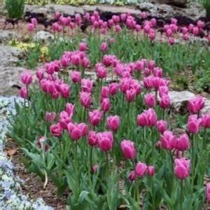 differents bordures de jardin archzinefr With decoration jardin zen exterieur 6 choisir une jardin zen miniature pour relaxer archzine fr