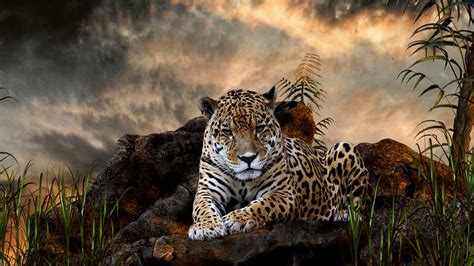 Hd Animal Wallpapers For Mac - leopard wallpaper hd 1080p wallpaper wiki