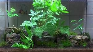 Pflanzen Für Terrarium : ewiges terrarium nach 7 monaten youtube ~ Orissabook.com Haus und Dekorationen