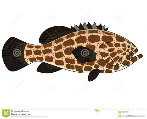 grouper fish cartoon vector illustration clipart clip drawings drawing graphic preview dreamstime