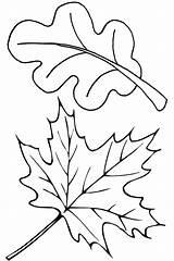 Oak Coloring Leaves Pages Leaf Printable Getcolorings Pa sketch template