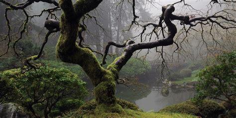winter reveals  bones   garden portland japanese