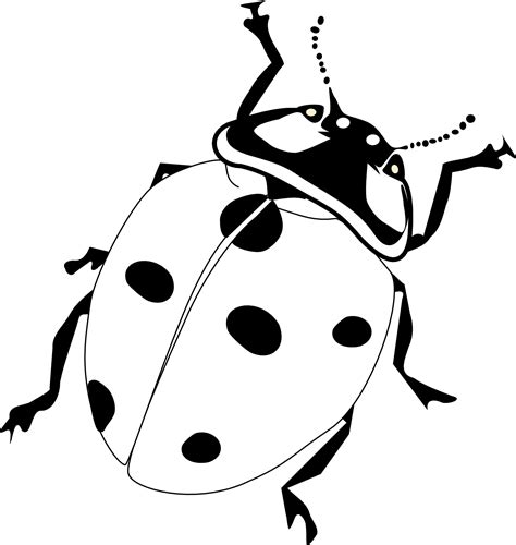 beetle clipart black and white beetle clipart black and white pencil and in color