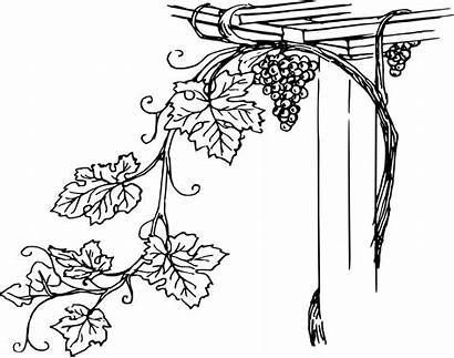 Grapevine Clip Svg Onlinelabels Vineyard Illustration