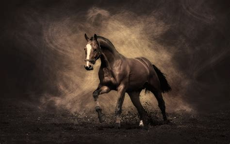 horse strength strong horses security lightning words never levy underestimate richard safety these stallion