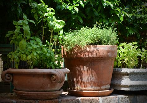 Window Spice Garden by Free Images Plant Flower Pot Green Herb Produce