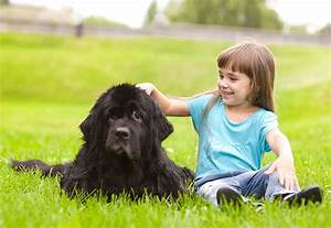 dog breed series part 4 10 kid friendly dogs