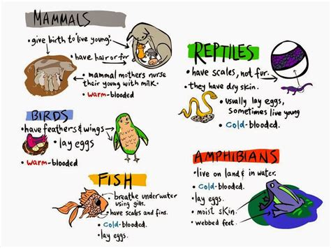 Education Made Fun: Science & English Yr 2 Animals