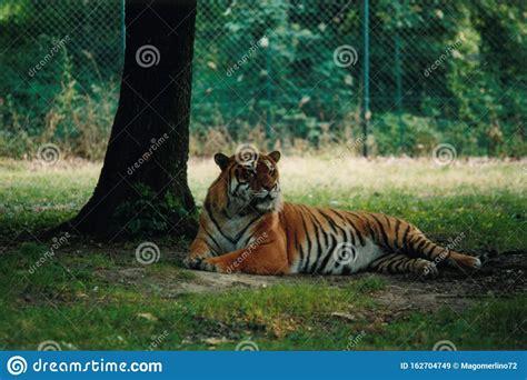 zoo animals tiere safari holiday katzenartig kopf