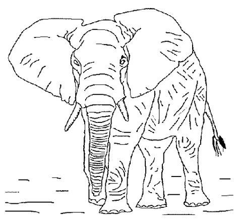 desenho de elefante   colorir colorircom