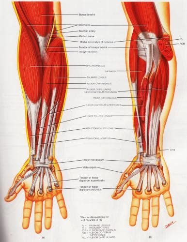 Knee diagram tendons, download this wallpaper for free in hd resolution. Athletic Training & Conditioning: A Guide to the Treatment ...