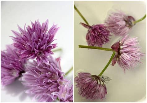 beurre 224 la fleur de ciboulette chez requia cuisine et confidences