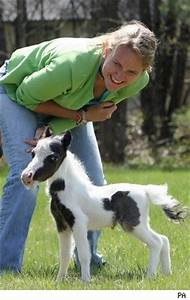 Smallest Full Grown Horse In The World