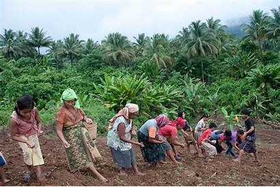 Indigenous Palawan Upland Rice Planting Kaingin Philippines