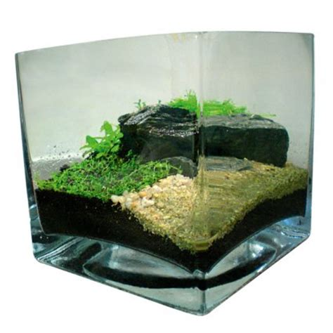 substrate aquascape how to aquascape small tanks practical fishkeeping magazine