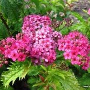 Plante De Bordure : plantes pour bordures fleuries ~ Preciouscoupons.com Idées de Décoration