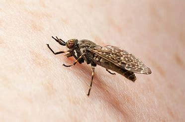 was hilft gegen stechmücken im schlafzimmer symptome des bremsenstichs wie einen bremsenstich