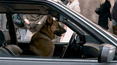 Dog Cool Driving Gifs Dogs Film Cars