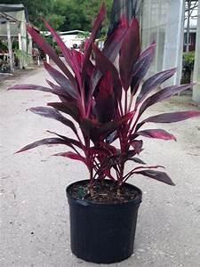 burnett 39 s wholesale nursery plantant