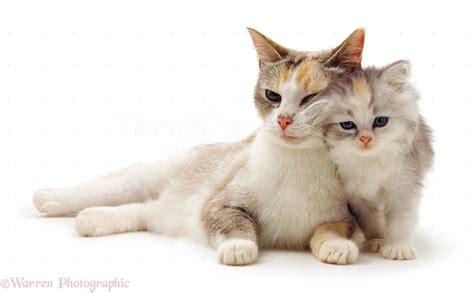 Cute Cat And Kitten Pictures Of Cats Kittens Ones  Litle Pups