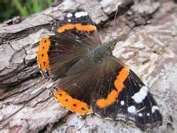 Halten Maulwürfe Winterschlaf : jahresarbeiten flora fauna habitat sose12 bio06 kurs 1 2 3 ~ Lizthompson.info Haus und Dekorationen