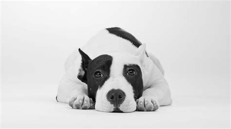 wallpaper dog cute animals  animals