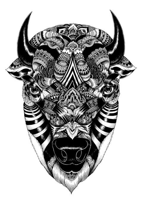 fascinating wildlife illustrations    iain