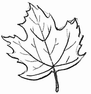 How to Draw Maple Leaves - Easy Leaf step by step drawing ...