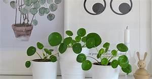 Zimmerpflanze Mit Roten Blättern : ufopflanze vermehren mein sch ner garten ~ Eleganceandgraceweddings.com Haus und Dekorationen