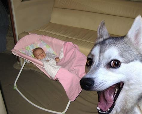 jealous dog photobombs  baby pictures  roman times