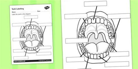teeth labelling worksheet teeth   body