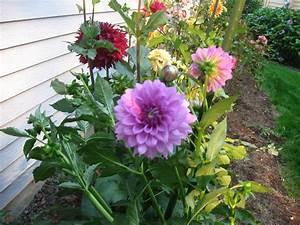 Sprinkler juice types of gardens for Garden flower