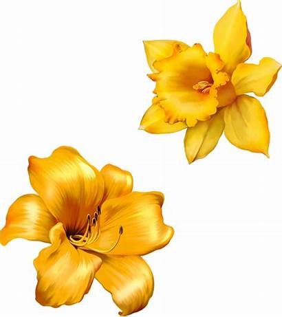 Flower Realistic Flowers Vector Yellow Drawing Lily