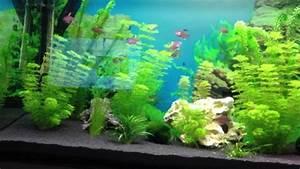 Aquarium Einrichten Beispiele : mein 200 liter aquarium youtube ~ Frokenaadalensverden.com Haus und Dekorationen